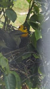 Making a nest
