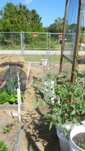 Self Watering Grow Buckets
