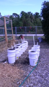 Self watering buckets