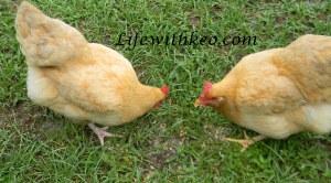 Chicken Little on left.